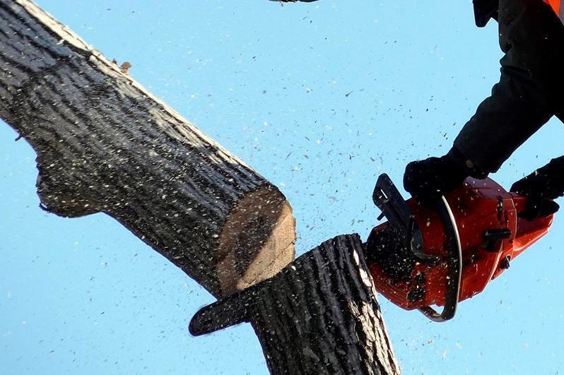 Алматыда Акушерлік орталық маңындағы ағаштар әкімдіктің рұқсатынсыз кесілген