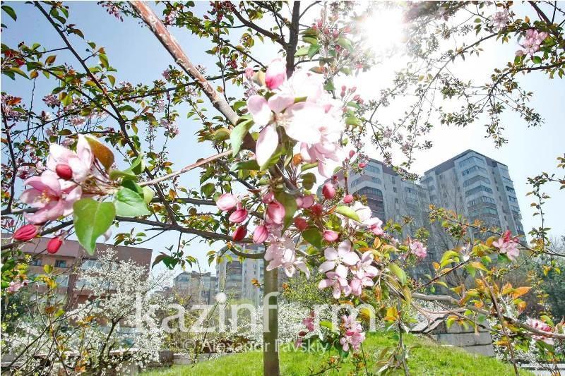 Теплая погода ожидается в большинстве регионов Казахстана 14 мая