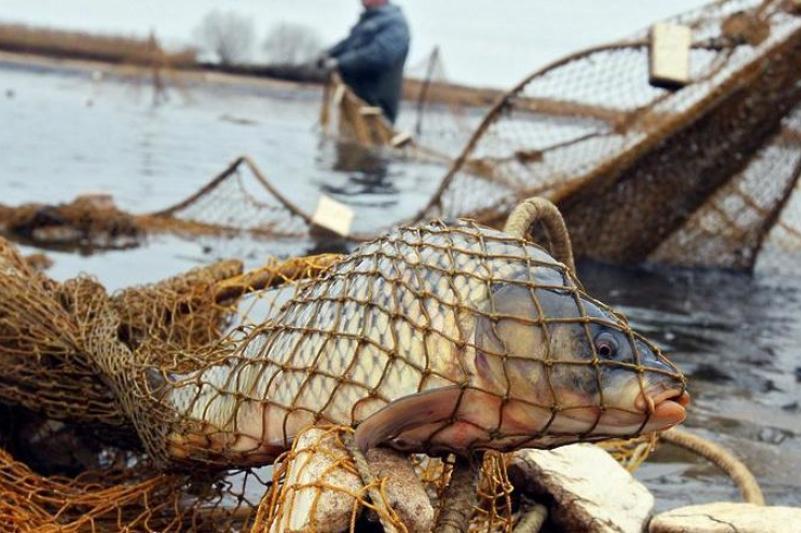 50 кг рыбы изъяли у браконьеров жамбылские полицейские