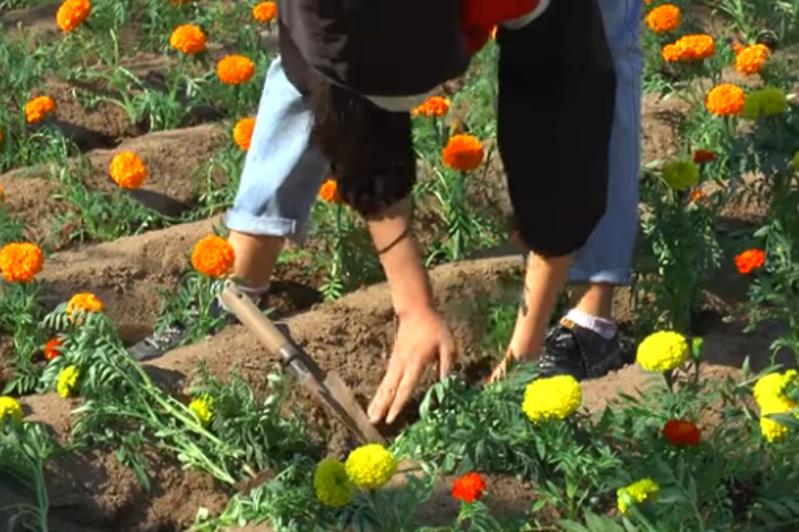 200 тысяч цветов высадят в Балхаше