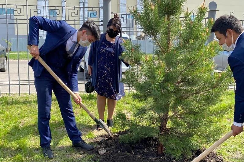 «Семейное дерево» посадили школьники СКО