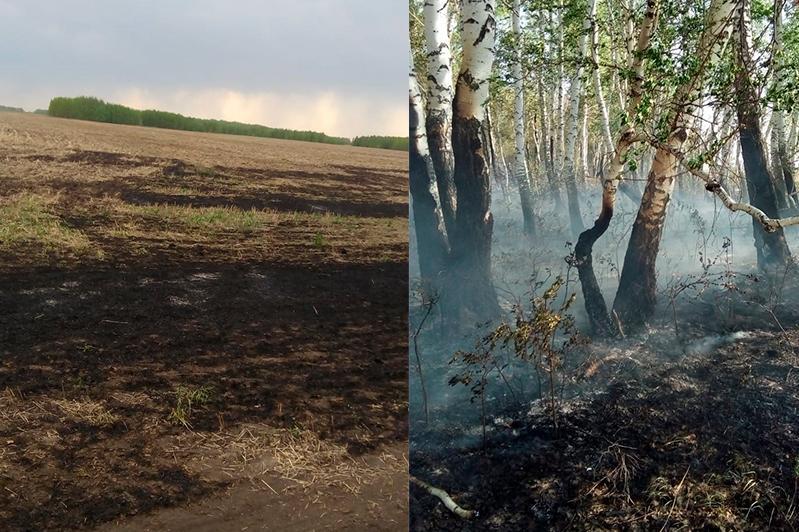 В лесах Костанайской области сохраняется IV класс пожарной опасности