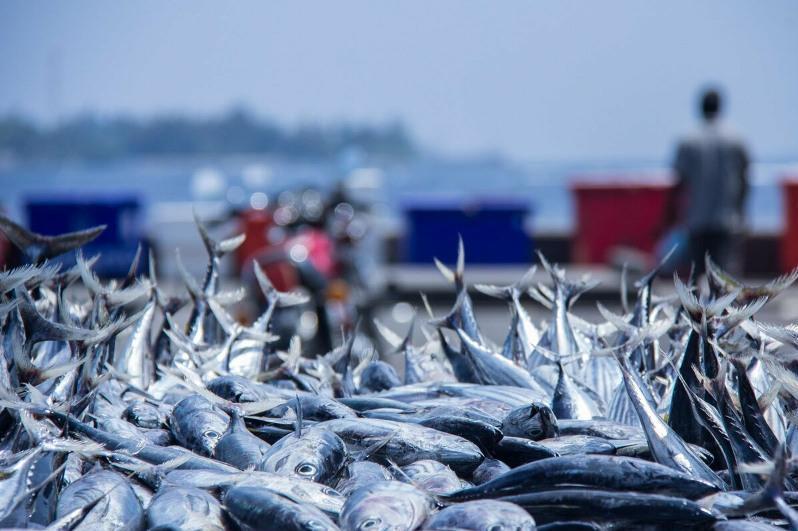 哈国将加大对渔业领域的政策扶持