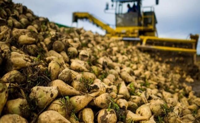 阿拉木图州农业总产值将提高到1.3万亿坚戈