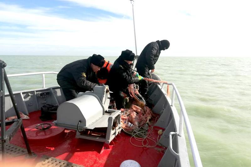 Акция «Бекіре»: в естественную среду обитания выпустили более 20 каспийских тюленей
