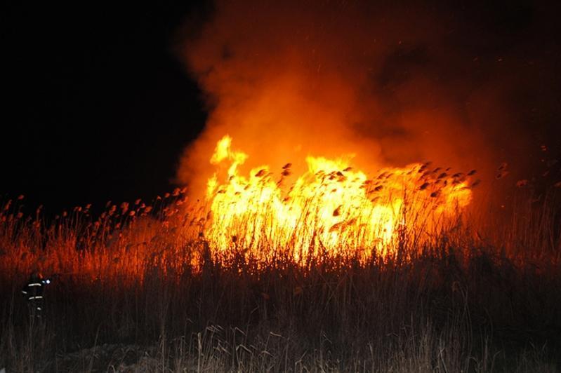 Павлодар облысында дала өрті ауылдың маңына дейін жайылды