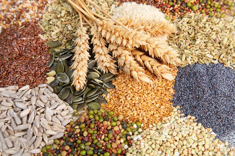 Насколько увеличилась доля элитных семян в посевах казахстанских аграриев