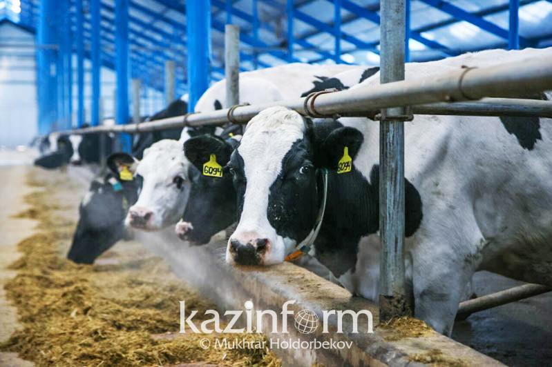 В Казахстане увеличивается численность поголовья скота и птицы