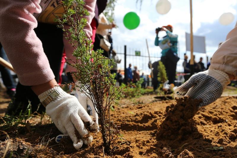 207 тысяч деревьев высадили в Жамбылской областив этом году