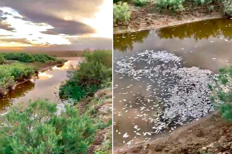 Атырау облысындағы Ноғайты өзенінде балық қырылды