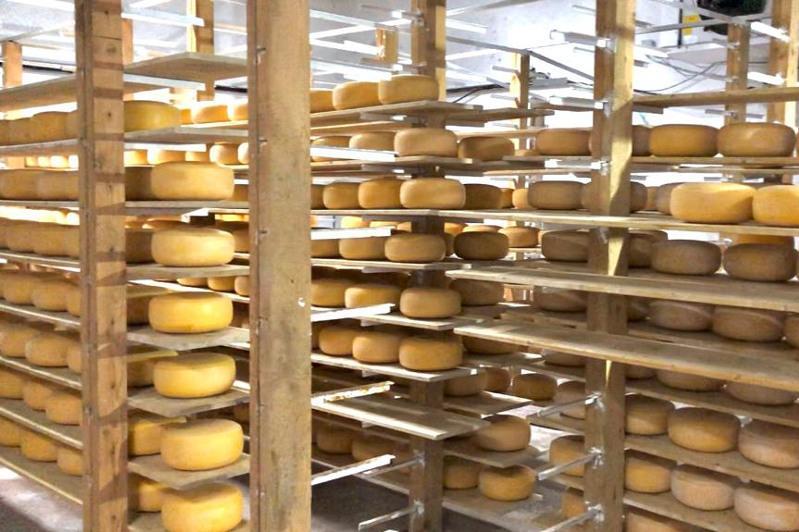 Сыр по голландской технологии производят в Акмолинской области