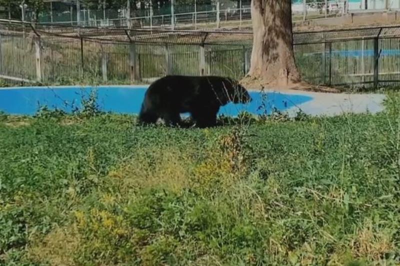 Медведей из зоопарка Алматы перевели в новый вольер