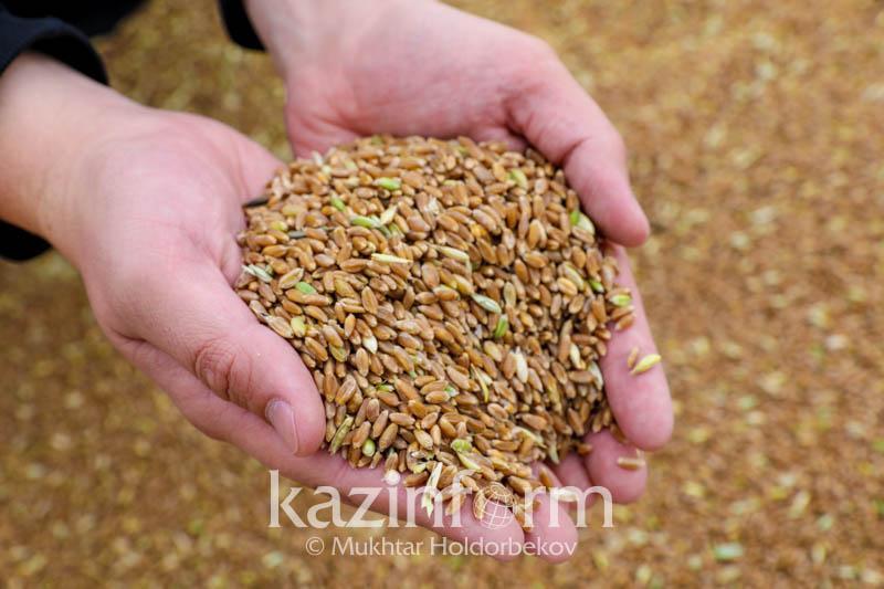预测:哈萨克斯坦今年将收获1426 万吨小麦