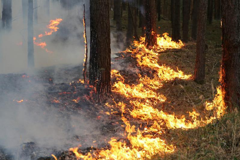 48 лесных пожаровпроизошлоиз-за гроз в Восточном Казахстане