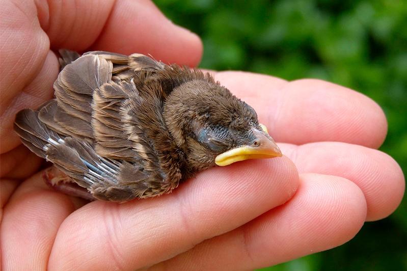 Не подбирать птенцов и детенышей диких животных призывают жителей СКО