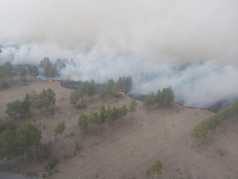 В пять раз увеличилось количество лесных пожаров в Костанайской области