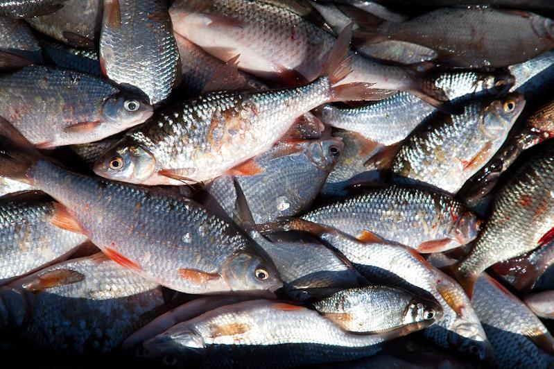 Свыше восьми тонн рыбы и рыбной продукции изъято у браконьеров на озере Балхаш