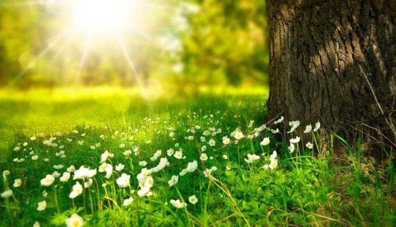 15 маусым күнгі ауа райы болжамы