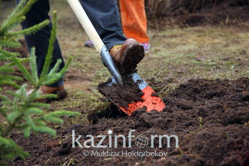 Kazakhstan plants 81.5mln trees