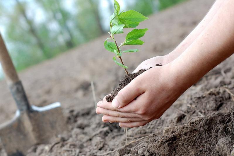 Сколько деревьев посадят осенью в Казахстане