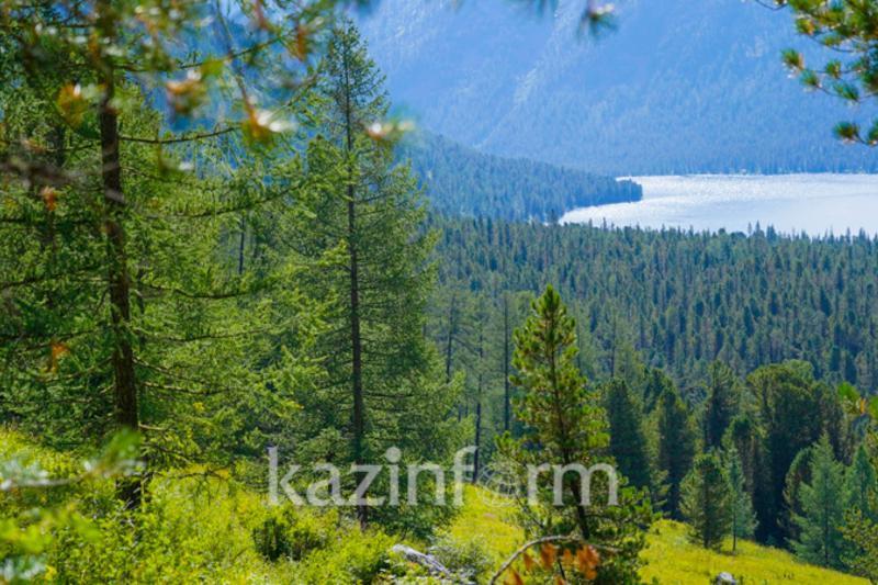 Интерактивную карту лесов хотят создать в Казахстане
