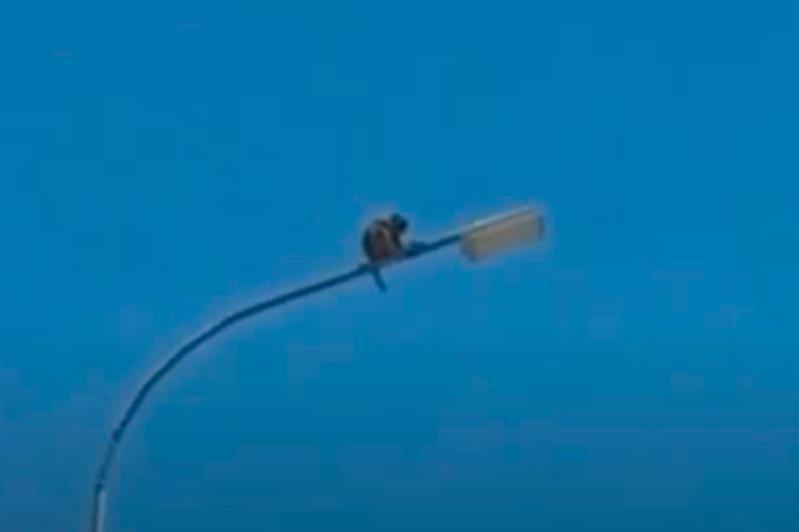 Хозяина сбежавшей обезьяны могут привлечь к ответственности в Туркестанской области