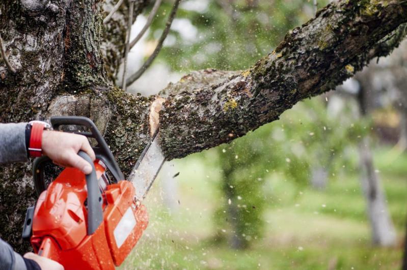 Парковка завода мороженого вместо 150 деревьев: Началась проверка по факту вырубки