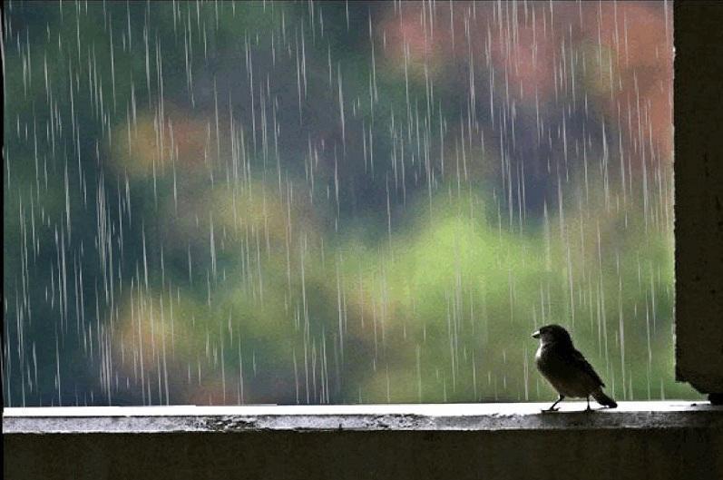 Дожди, усиление ветра и град ожидаются 18 июня в Казахстане