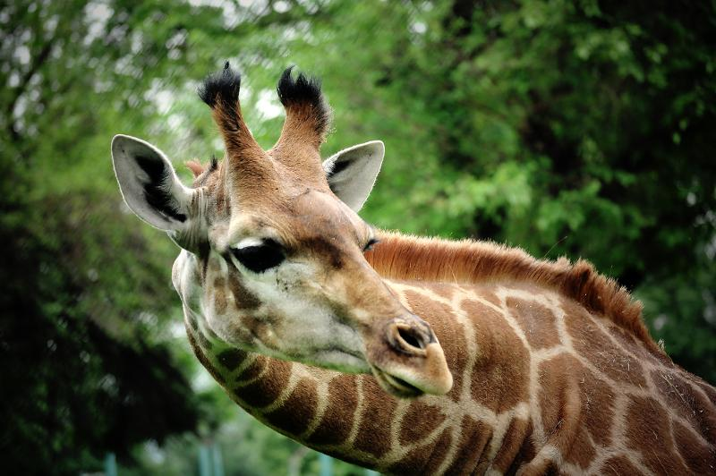 Как живут слоны и жирафы в Алматинском зоопарке