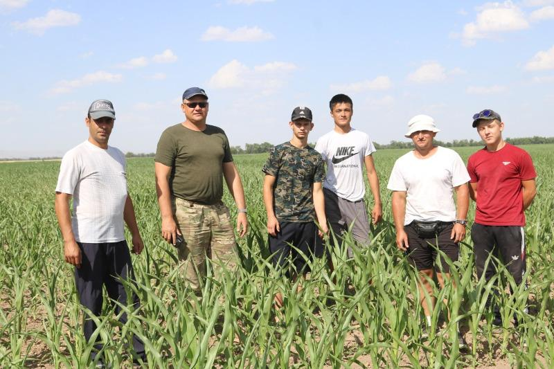 Посевы кукурузы увеличивают жамбылские аграрии