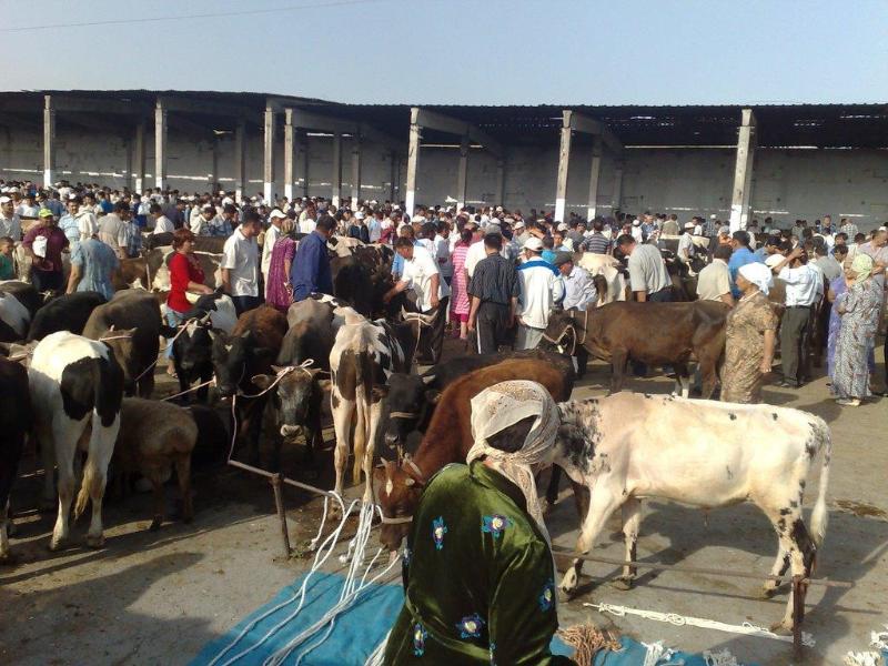Shyǵys Qazaqstanda mal bazary ashylmaq