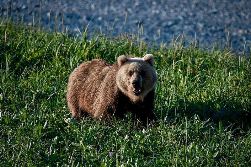 Медведь напал на туристов в Красноярском крае