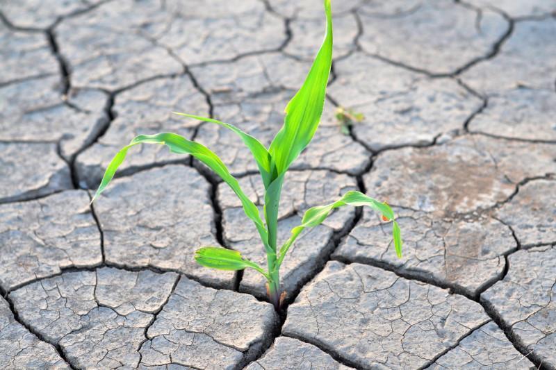 Готова ли Актюбинская область к засухе