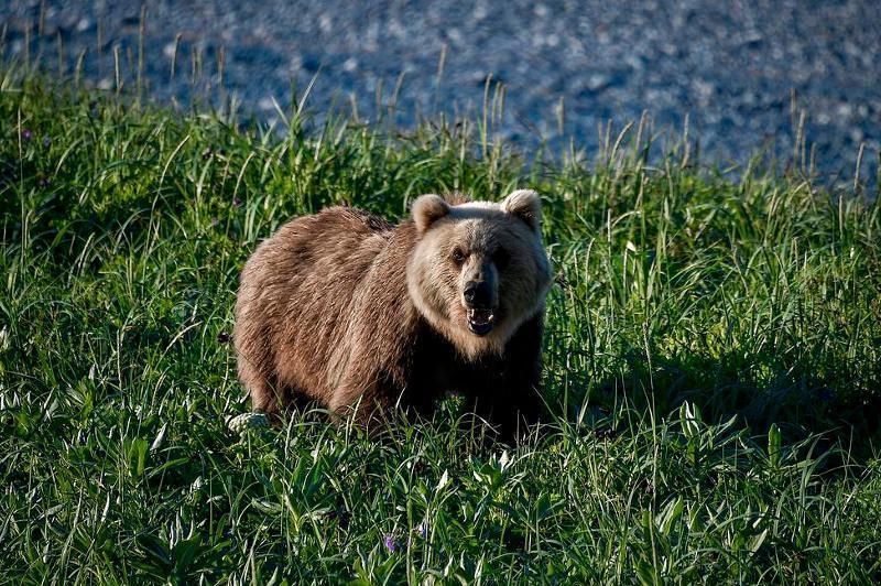 俄罗斯叶尔加基国家公园一旅行团遇熊袭击 致1死1伤
