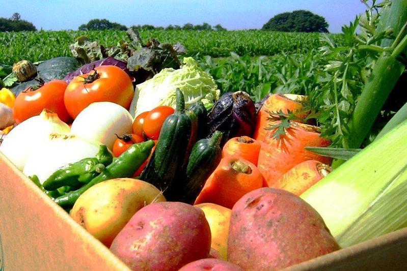 哈萨克斯坦计划出口70万吨蔬菜
