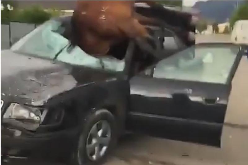 Водитель сбил лошадь в Алматинской области