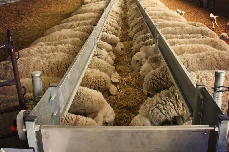 Правительстворассмотрело введение запрета на экспорт овец