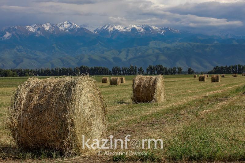 6,5 млн тонн сенадля зимовки скота заготовлено в регионах Казахстана