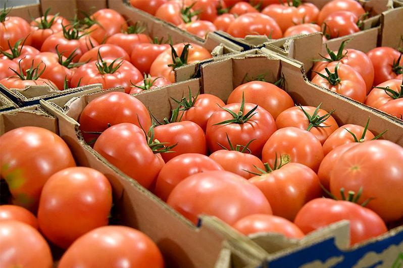 欧亚经济联盟将番茄病毒列入植物检疫名录