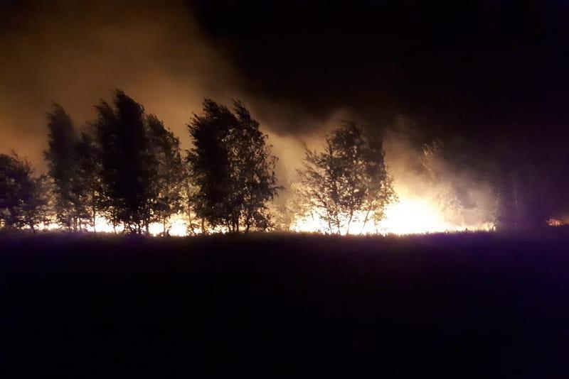 Три дня тушили крупный лесной пожар в Костанайской области
