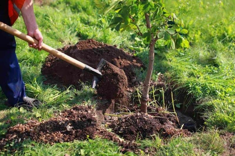 2 млрд түп ағаш отырғызу: Әрбір қазақстандық ұсыныс жасай алады