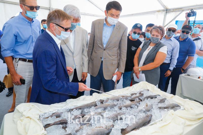 10 тысяч тонн австралийской рыбы будут выращивать в Алматинской области