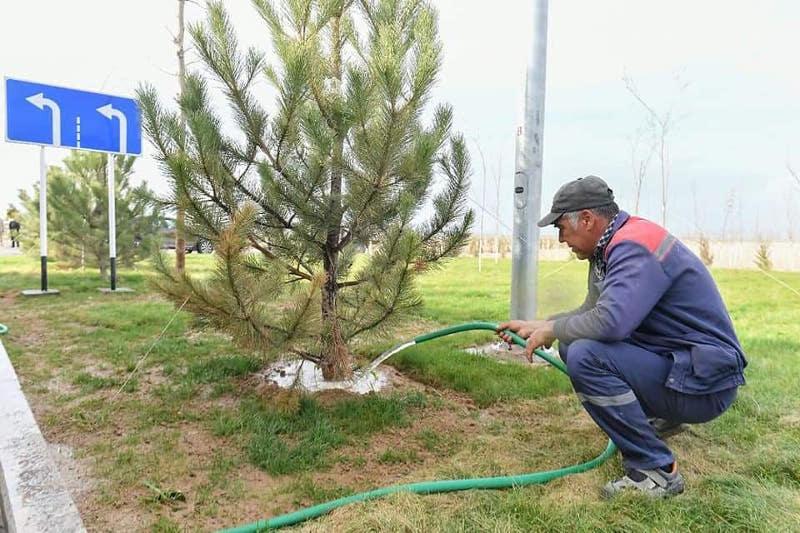 В Туркестане внедряется новая система озеленения