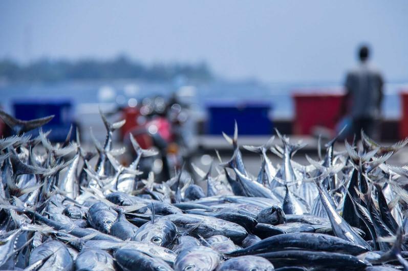 江布尔州拟大力发展渔业