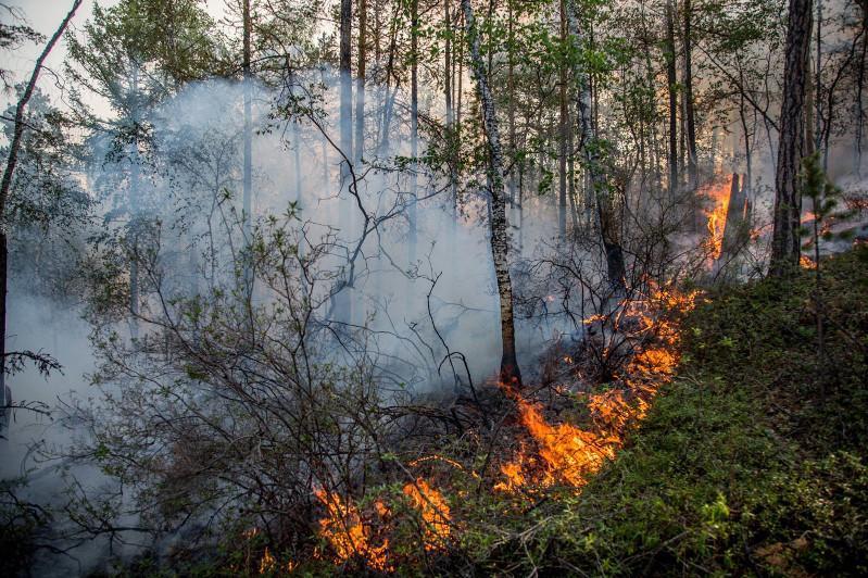 ShQO-da jyl basynan beri 492 gektar orman órtengen
