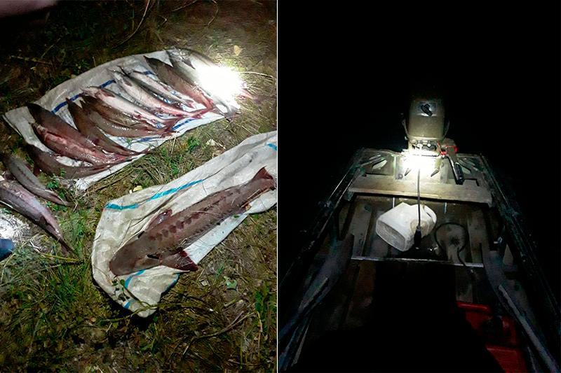 Ущербсвыше 3 млн тенге нанесли браконьеры в Павлодарской области