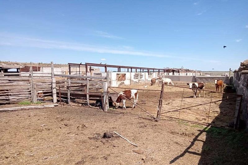 4,5 тысячи животных поместили на штрафстоянки Павлодарской области