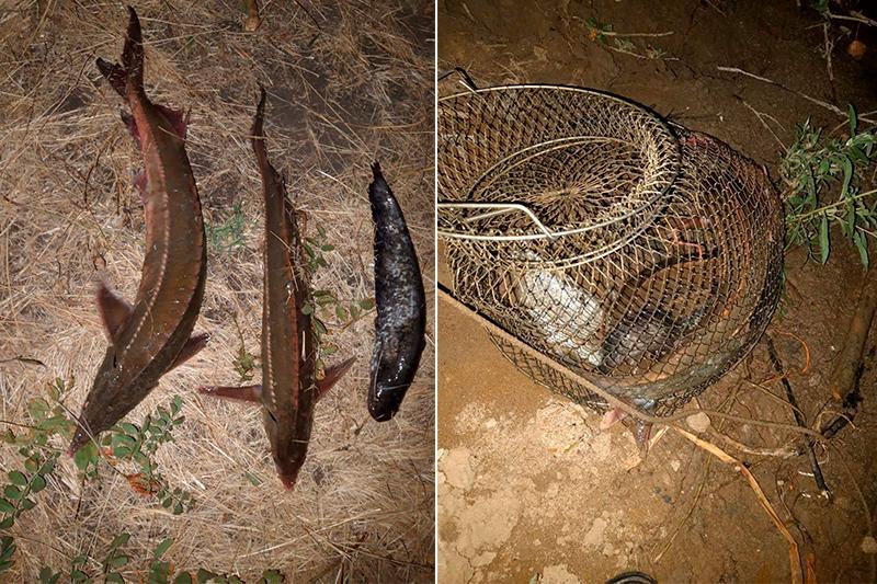 БҚО: Жайық өзенінде сирек кездесетін балық түрін аулаған браконьерлер ұсталды