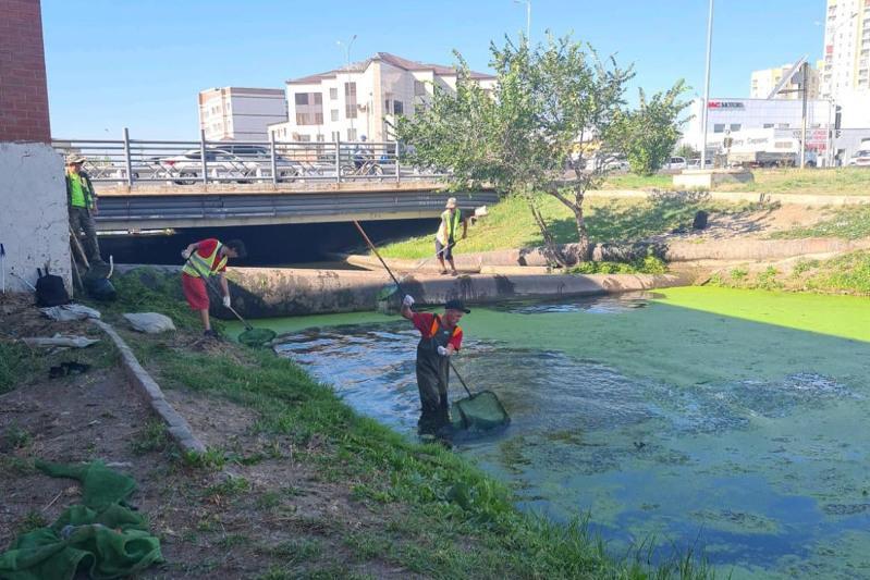 Чем вызвано позеленение воды на набережной реки Есиль в столице