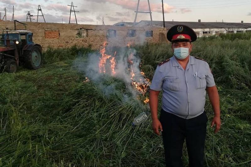 Коноплю на трех гектарах сожгли в одном из районов ВКО